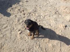 On a rencontré plusieurs chiens en Egypte sur plage, que l'on allait nourrir chaque jours