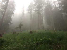 Jour 1 dans le brouillard