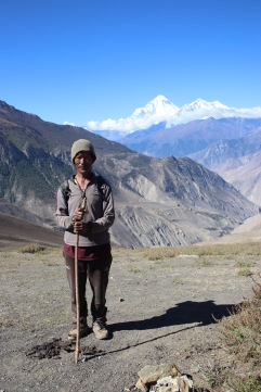 Berger népalais