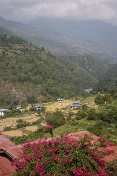 Rizières dans la vallée