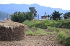 Rouleau de foin bhoutan