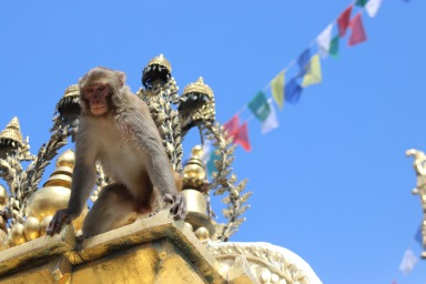 Anuman le roi du temple