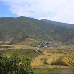 Rizière Punakha