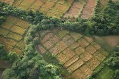 Les rizières et autres cultures