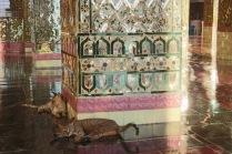 Chats dans le temple