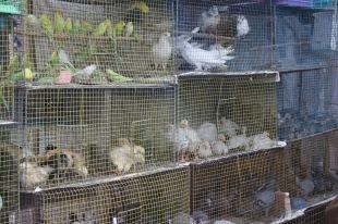 Les oiseaux du marché