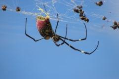 Macro araignée 🕷