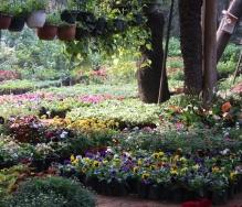 Quartier des fleuristes