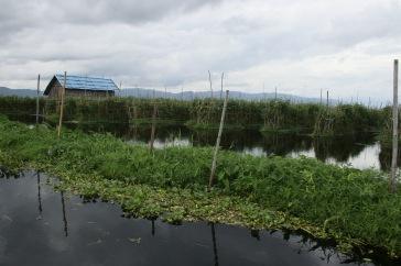 Jardins flottants du lac