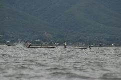Pêcheurs qui tapent sur l'eau pour diriger les poissons