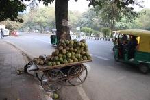 Vendeurs de noix de cocos