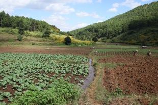 plantations de légumes
