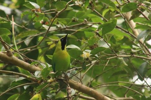 Joli petit oiseau vert