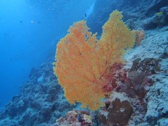 Arbre sous-marin