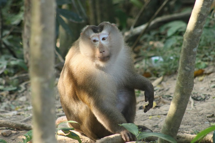 Le vieux singe