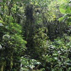La densité de la forêt tropicale