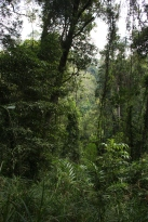 La végétation dense