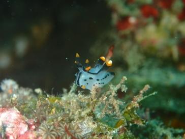Petite nudibranche