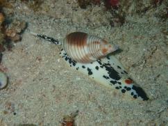 Mollusque