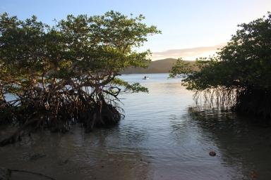 Arrivée dans les mangroves
