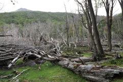 Cimetière d'arbres