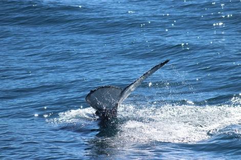 Au revoir baleine