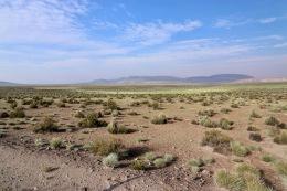 Parc national Las Vicuñas