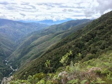 Moitié jungle, moitié forêt
