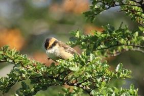 Joli petit oiseau