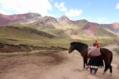 Mule dans la vallée