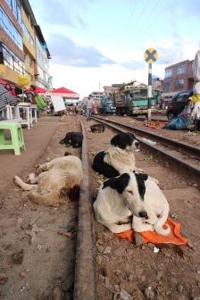 les chiens du marché