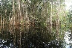 Sur la rivière en Amazonie