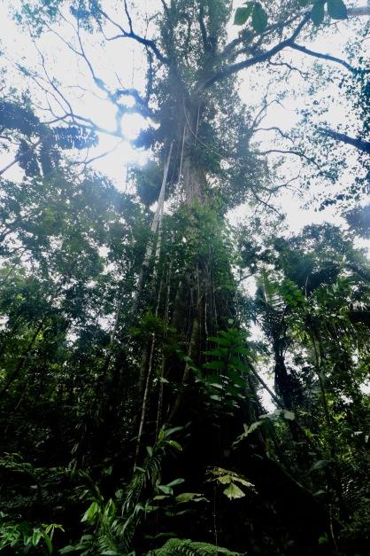 La jungle vue d'en bas